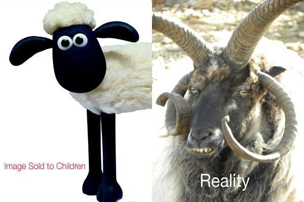 sheep_truth_vs_fiction